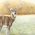 Foggy Morning Buck by Charlotte Yealey