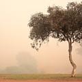 Foggy Morning by Elaine Teague