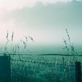 Foggy Morning by Hideaki Sakurai