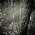 Foggy Morning In The Woods by Amy Delaine