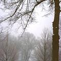 Foggy Morning Landscape 10 by Steve Ohlsen