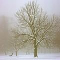 Foggy Morning Landscape 7 by Steve Ohlsen