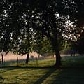Foggy Morning by Mark McReynolds