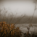 Foggy Morning Marsh by Carolyn Marshall