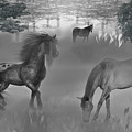 Foggy Morning Pasture by Lisa Stanley