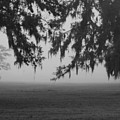 Foggy Morning Study Vii by Paulette B Wright