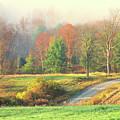 Foggy Morning by Terri Tiffany