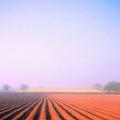 Foggy Morning Tuscany by Dominic Piperata
