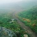 Foggy Mountain Path by Ronnie Glover