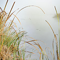 Foggy Reeds by Erich Grant