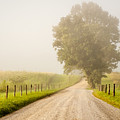 Foggy Road by Keith Allen