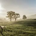Foggy Sun Rise by Keith Bowen