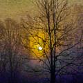 Foggy Sunset by Susan Eileen Evans