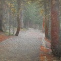 Foggy Trail Near Bear Lake by Jon Burch Photography