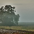 Foggy Tree In The Field by Michael Thomas