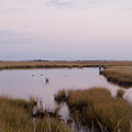 Folgers Marsh Nantucket by Henry Krauzyk