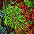 Foliage Abstract 3698 by William David Thomas