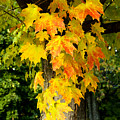 Foliage Fall by Greg Fortier