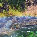 Follow The Rainbow by Pamela Walton