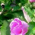 Following A Bumble Bee In Flight by Debra Lynch