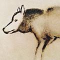Font De Gaume Wolf by Weston Westmoreland