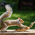 Food Fight Squirrel And Chipmunk by Terry DeLuco