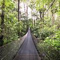Foot Bridge In Costa Rica by Linda D Lester