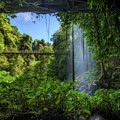 Footbridge And Crystal Falls  In The Rainforest Of Dorrigo In Australia by Miroslav Liska