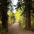 Footbridge In Aspen Colorado by Karen Freeman