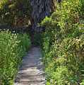Footpath In Peters Canyon I by Linda Brody