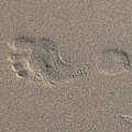 Footprint In The Sand by Liz Vernand