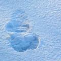 Footprint In The Snow by Pamela Peters