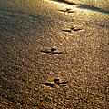Footprints - Bird by Jill Reger