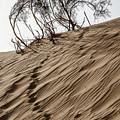 Footprints  by Arik Baltinester