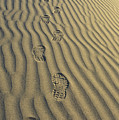 Footprints In The Sand by Joe  Palermo
