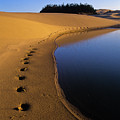 Footprints In The Sand by Robert Potts
