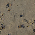 Footprints In The Sand by Steve Gravano