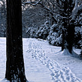 Footprints In The Snow by William Kuta