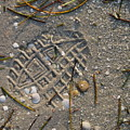 Footsteps by Michael L Gentile