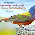 For Every Storm A Rainbow Irish Blessing by Bonnie Barry