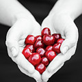 For The Love Of Cherries by Susan Maxwell Schmidt