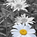 For The Love Of Daisy by Traci Cottingham