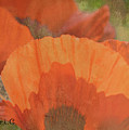 For The Love Of Poppy by Traci Cottingham