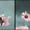 For You - Diptych by Aimelle