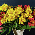 Foral Bouquet Of Red And Yellow Astomelia by Douglas Barnett