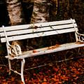 Foresaken Seat by Venetta Archer