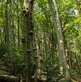 Forest 1 by Marcin Rogozinski
