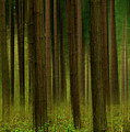 Forest Abstract01 by Svetlana Sewell