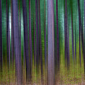 Forest Abstract02 by Svetlana Sewell