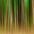 Forest Abstract04 by Svetlana Sewell